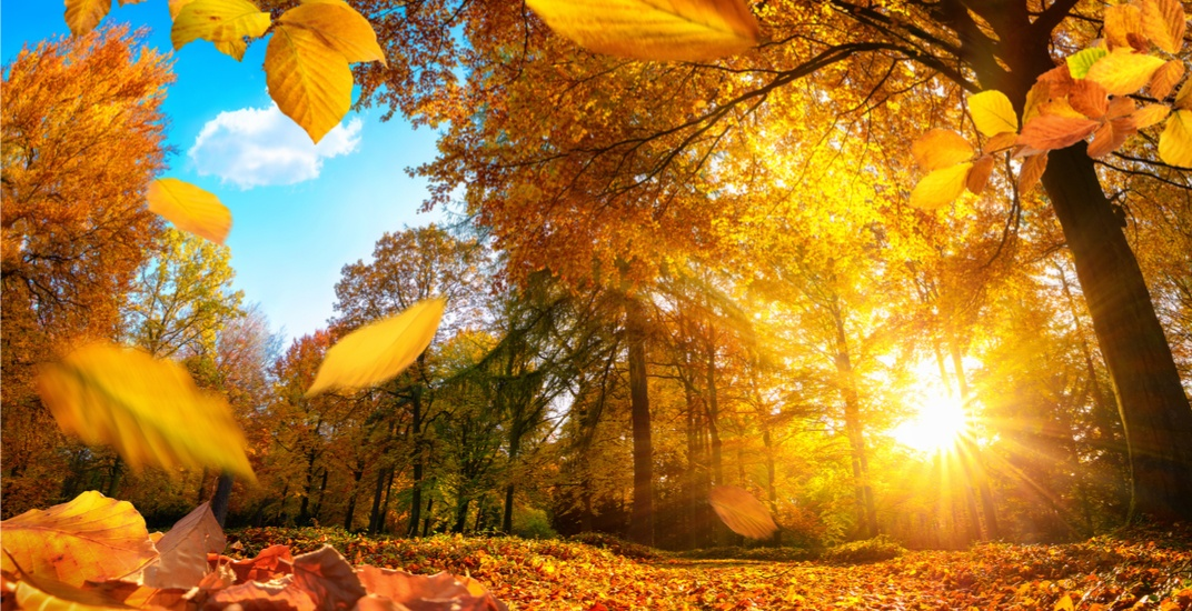 The first day of fall is just over a week away, and The Weather Network has released its outlook for Canada's upcoming season.